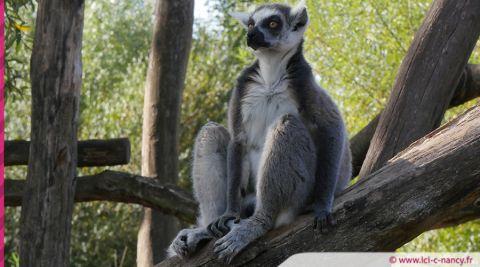 Sainte-Croix élu meilleur « Zoo et Parc Animalier » de France par le magazine Capital