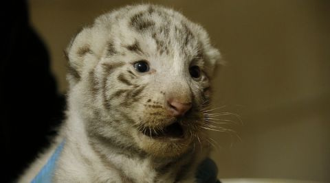 Le Zoo d'Amnéville va rouvrir ses portes avec une baisse des tarifs