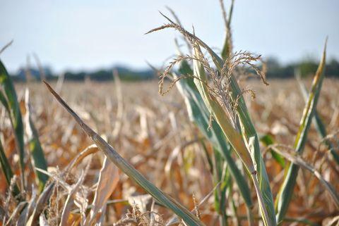 Alerte sécheresse pour les zones « Moselle aval Orne Nied et Seille » et « Moselle amont et Meurthe »