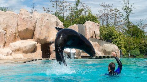 Zoo d'Amnéville : l'opération « 10.000 billets gratuits pour les soignants » cartonne